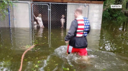 Volunteer rescuer saves dogs trapped in Florence floodwaters