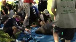 Manatees rescued after trapped in Florida pond