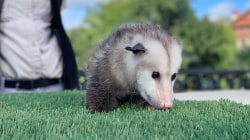 Hoda and Jenna get up close and personal with Louisiana wildlife