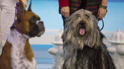 Meet a few adorable pups from the National Dog Show!