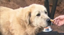 Dog refuses to abandon his home, even after it burned in Paradise, CA fire