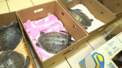 TODAY headlines: Sea turtles rescued; Robot Salvation Army ringer