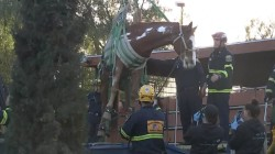 Horse rescued after falling into dumpster