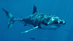 Could shark DNA hold the cure for cancer?