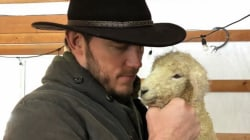 Chris Pratt captions photo of himself on Katherine Schwarzenegger's Instagram