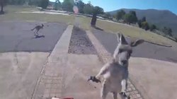 Kangaroo punches a paraglider, and more Highs and Lows of the week