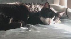 Pest company fumigates home, killing pet left inside