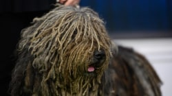2019 Beverly Hills Dog Show: See the furry friends competing