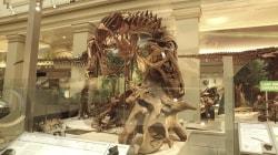 Inside the Smithsonian's newly-renovated dinosaur hall