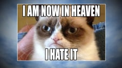 Grumpy Cat: World bids farewell to meme sensation