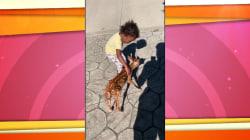Watch: NFL player's young daughter befriends a baby deer