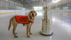 See TODAY puppy Sunny's journey with the NHL playoffs