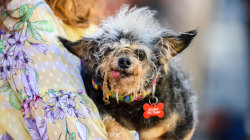 Scamp the Tramp crowned as World's Ugliest Dog