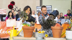Summer gardening tips with George Oliphant