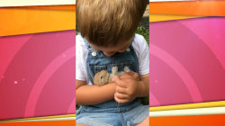 Rock-a-bye bunny: Boy sings a lullaby to his pets