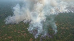 Protesters demand action as Amazon fire rages