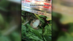 Frog found alive in salad packaging