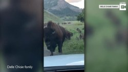 Bison stampede damages Yellowstone tourists' car, and more Highs and Lows
