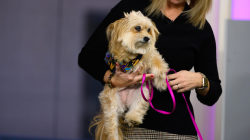 Meet 3 of the finalists for the American Humane Hero Dog Awards
