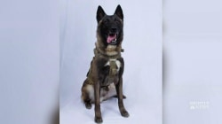 How America's elite military dogs are trained to save lives