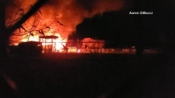 Exotic animals killed in fire at African Safari Wildlife Park in Ohio
