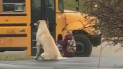 Watch this little girl's VERY big dog wait with her for the school bus