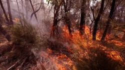 Ferocious bushfire consumes trees in Australia