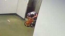 Watch man rescue dog whose leash got caught in elevator