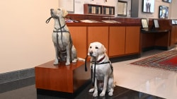 President George H.W. Bush's service dog Sully honored with statue
