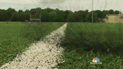 Feds to Investigate Safety of Crumb Rubber Turf Fields