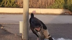 Turkey Takes Over Colorado Business Park
