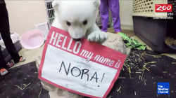 Baby Polar Bear Born at Columbus Zoo