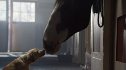 "Budweiser wins big with ""Puppy Love"""