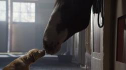 "Budweiser wins big with ""Puppy Love"""