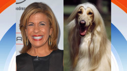 If Hoda were a dog, she'd be a…