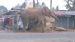 Video: Elephant goes on rampage, smashing homes in Indian town