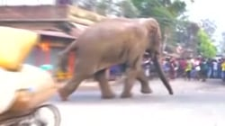 See Wild Elephant Run Amok in Indian Village