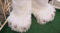 Ashley Greene explains furry feet tweet