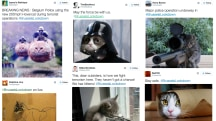 Twitter Responds to #BrusselsLockdown With...Cats