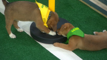 Watch TODAY's very own Puppy Bowl!