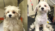 Shelter dogs get free haircuts to make them more adoptable