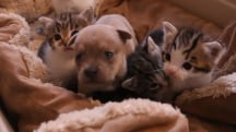 Adorable orphaned puppy meets his new mother (a cat!)