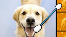 Doggie DNA home tests could help you determine breed