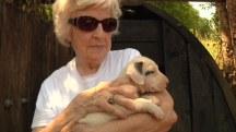 Puppy Survives Inferno