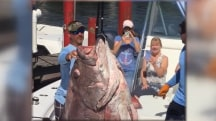 Florida Man Catches 347-Pound Fish