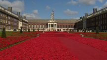 Knitted Poppies a Stunning Tribute to Victims of War