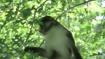 Escaped monkey forces zoo to close temporarily