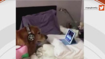 Dog scared of fireworks is soothed by iPad
