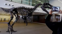 New Dinosaur in T-Rex Family Discovered in Argentina