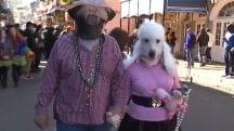 Mardi Gras In Full Swing
